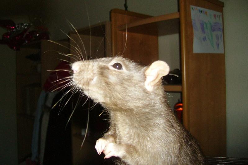 Mes choupinettes rattounettes ! <3 Pict0012