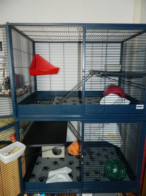 A vendre cage savic Dscn1010