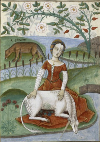La Licorne Rose Invisible (IPU Invisible Pink Unicorn) Livre-11