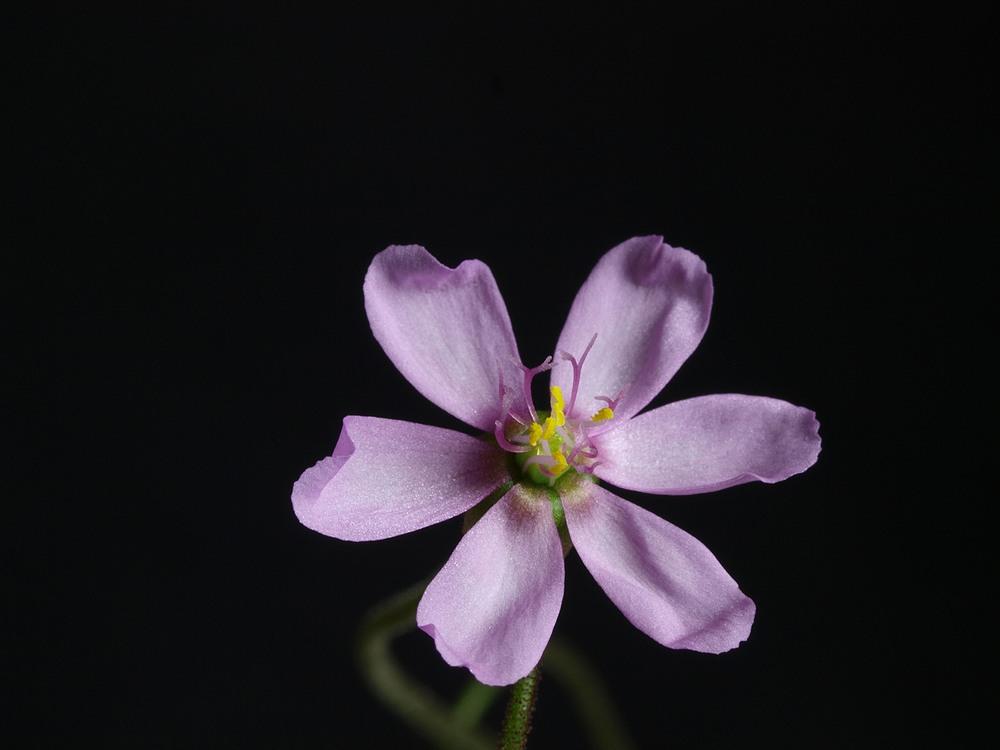 Des fleurs et beaucoup d'autres... Alicia11