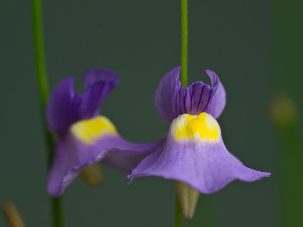 Des fleurs et beaucoup d'autres... P2201615