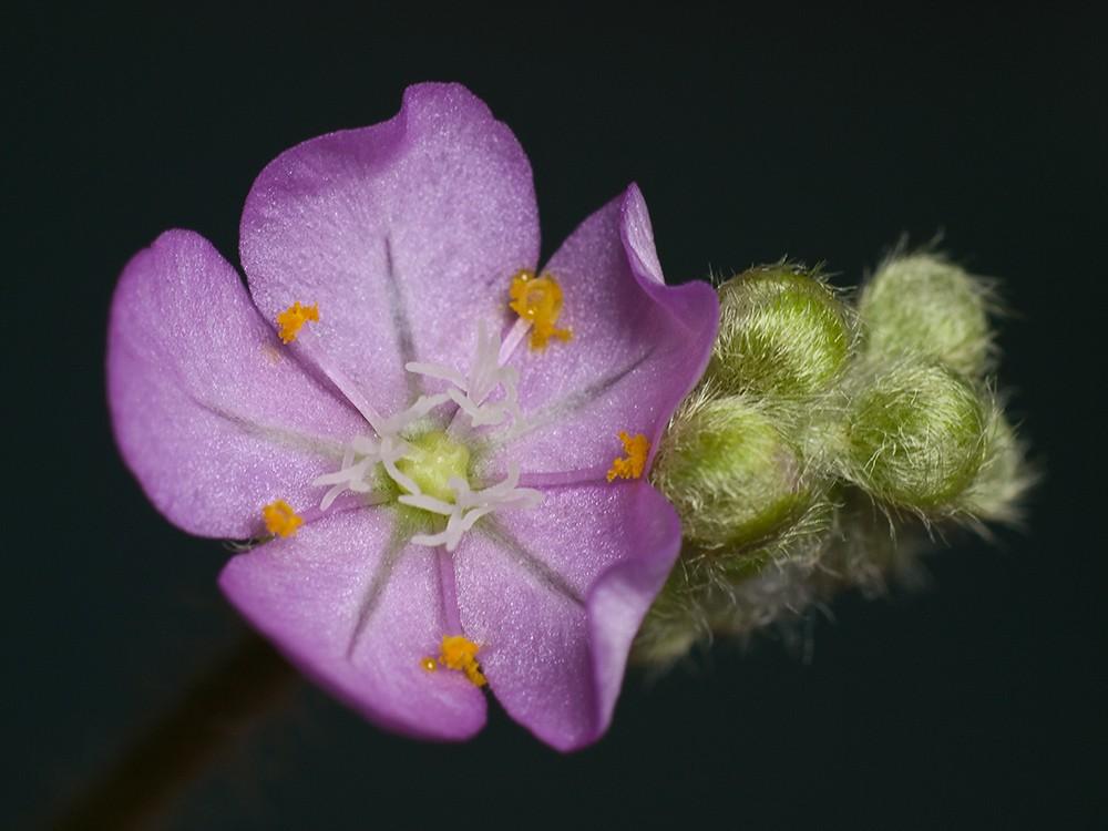 Des fleurs et beaucoup d'autres... P2201616