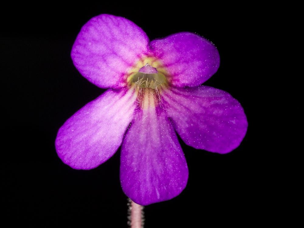 Des fleurs et beaucoup d'autres... P9250810