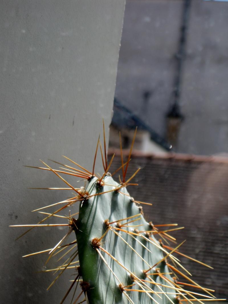 Les cactus Img_4410