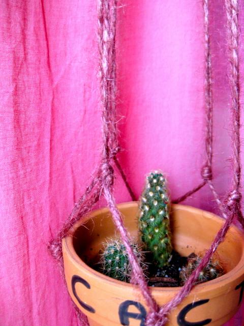 Les cactus Img_7410