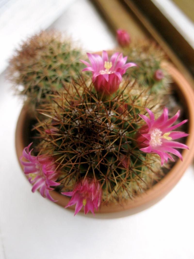 Les cactus Img_8210