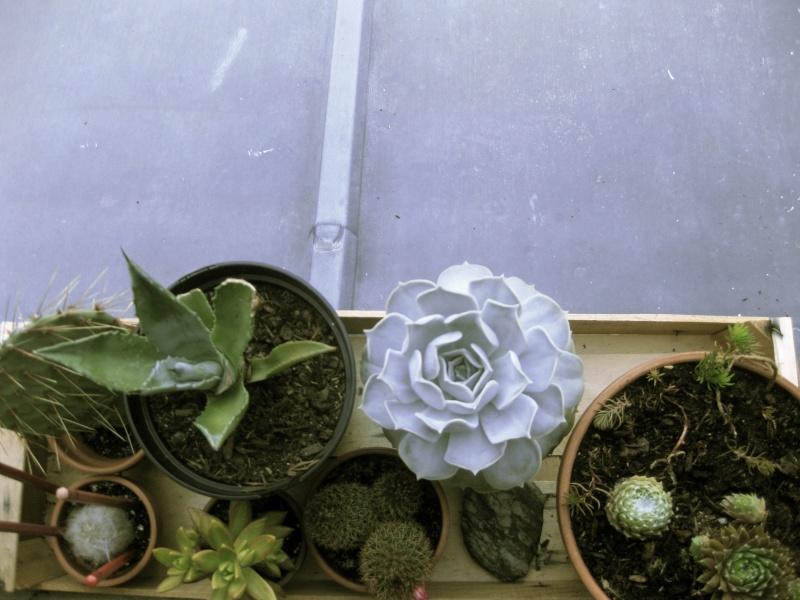Les cactus Img_8310