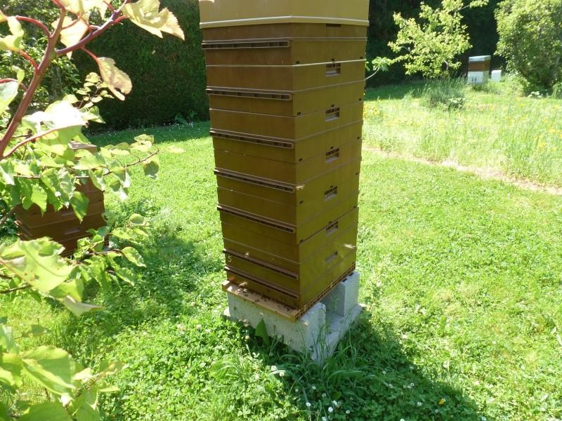 Elevage royale simplifié dans Hausse d une ruche de production 12110