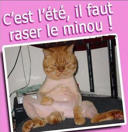 Humour en image ... - Page 5 42972510