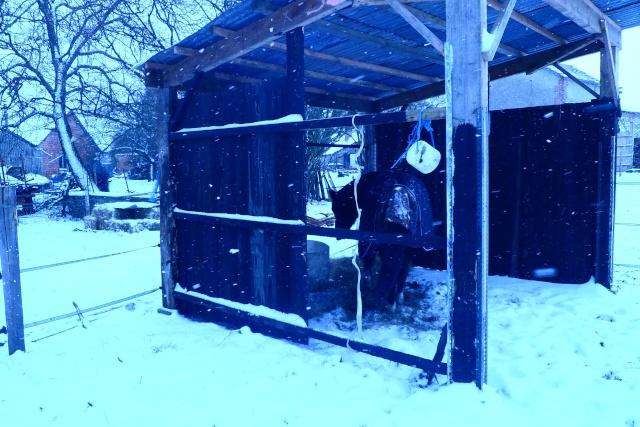Abris pour chevaux Sam_2415
