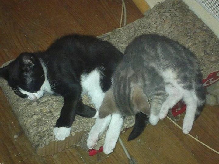 Felix et Jenny 54693110