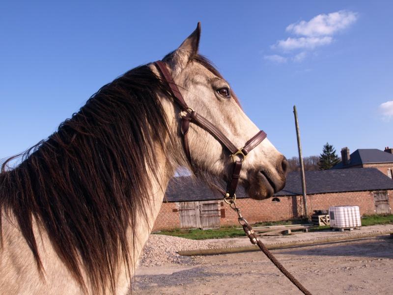 materiel cavalier et cheval GROSSES PROMO JUSQUE FIN DECEMBRE!!! Licol210