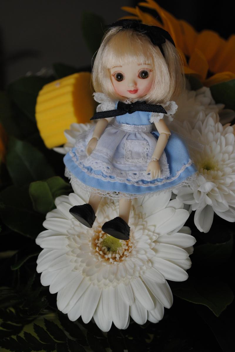 Amelia de nouveau à la maison^^ Dsc_1728