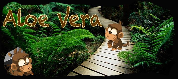Aloe Vera 20120110