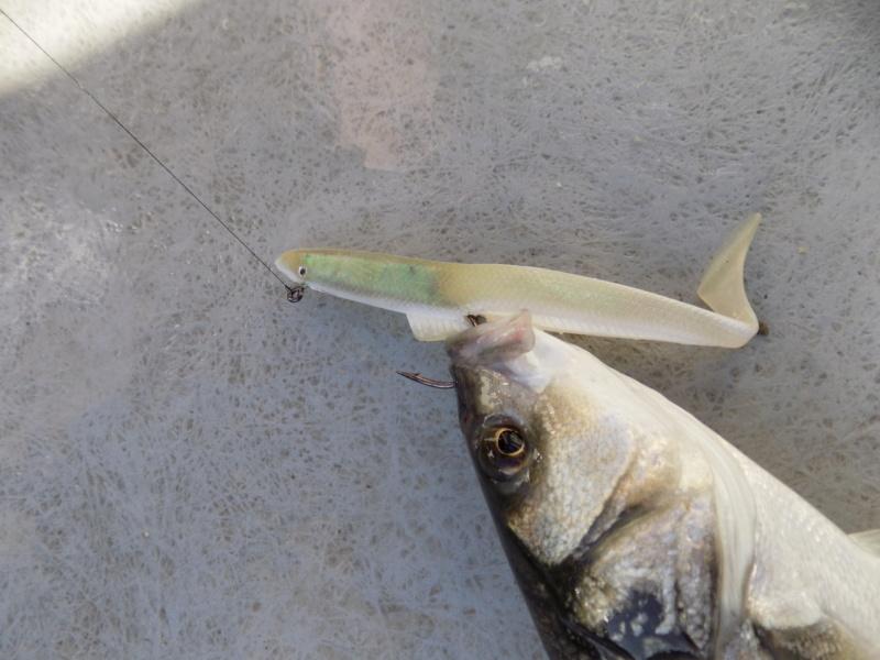 bass fishing hots up finally  Angles13