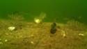 waterwolf underwater footage Vlcsna27