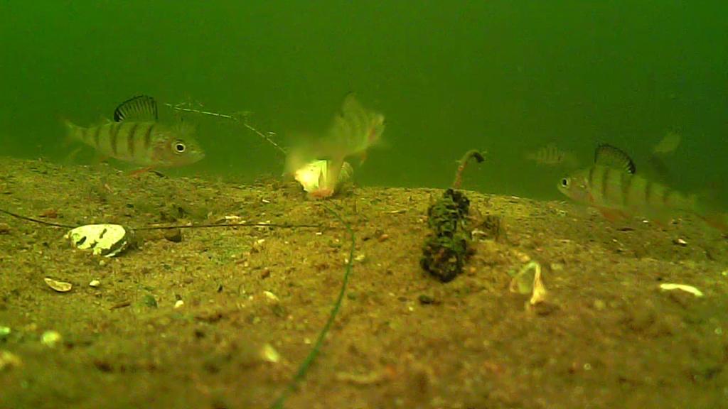 waterwolf underwater footage Vlcsna28