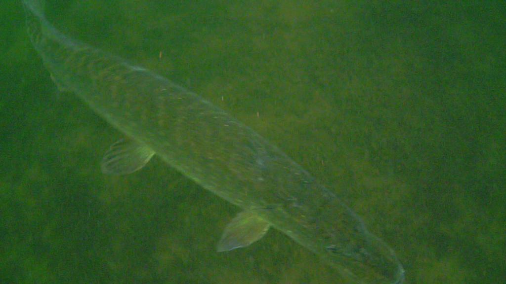 waterwolf underwater footage Vlcsna29