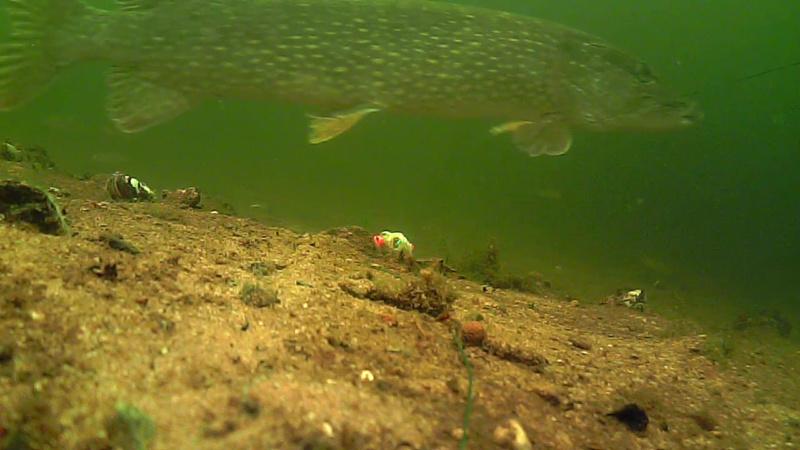 waterwolf underwater footage Vlcsna30