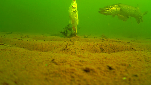 waterwolf underwater footage Vlcsna31