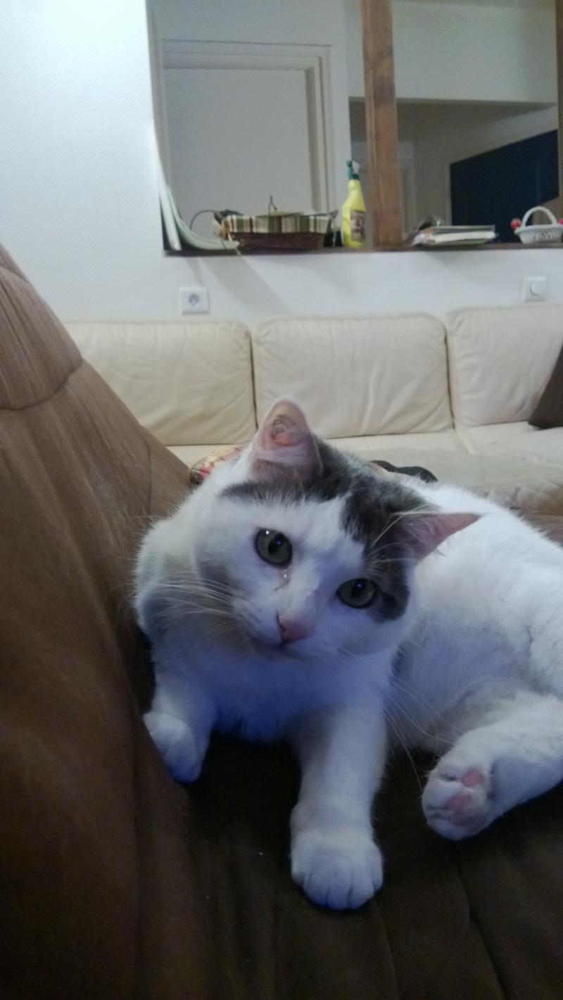 the cat Wp_20113