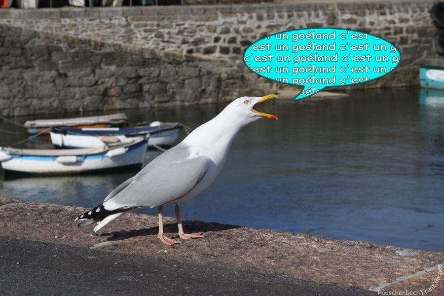 Animaux, oiseaux... etc. tout simplement ! - Page 39 Img_2912