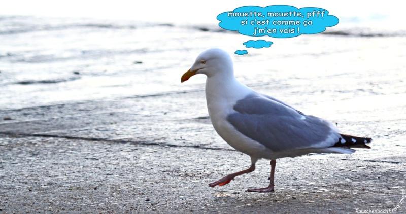 Animaux, oiseaux... etc. tout simplement ! - Page 39 Img_8311