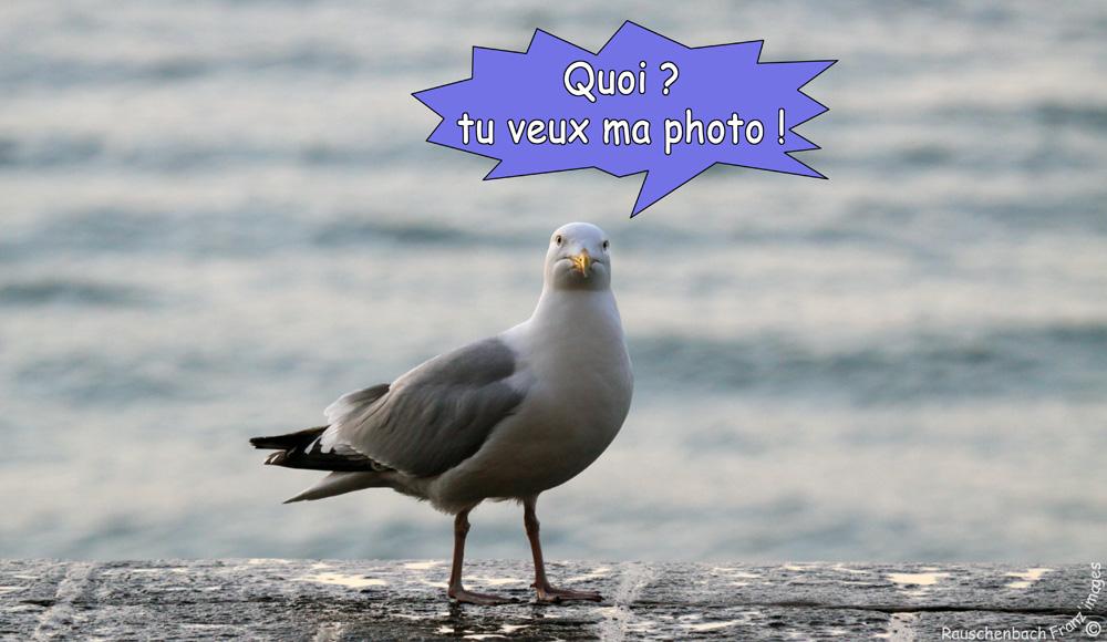 Animaux, oiseaux... etc. tout simplement ! - Page 38 Ma_pho10