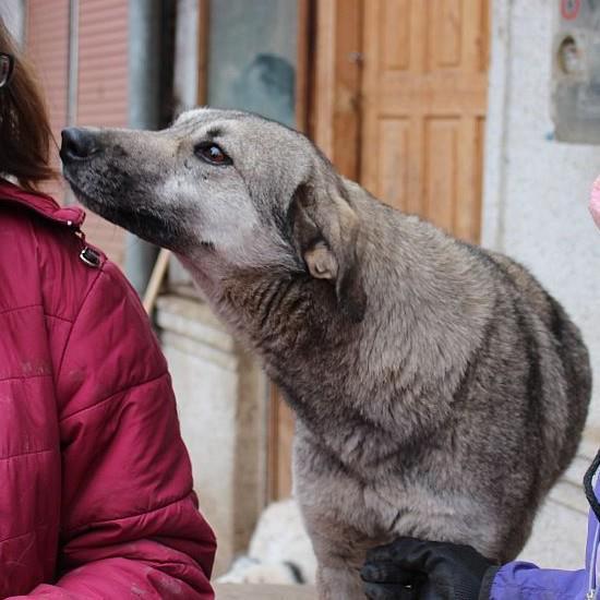GIGI, femelle croisée, taille moyenne, née en 2010 (Anda) asso Mukitza Gigi110