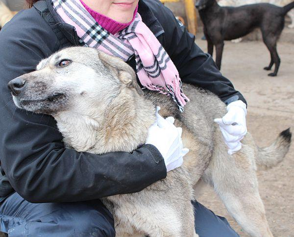 GIGI, femelle croisée, taille moyenne, née en 2010 (Anda) asso Mukitza Gigi310