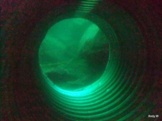 Vivian - Sunshine diving!! Dpp_0018