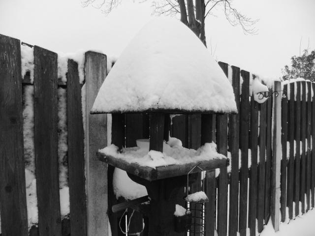 Winter Dscf5510