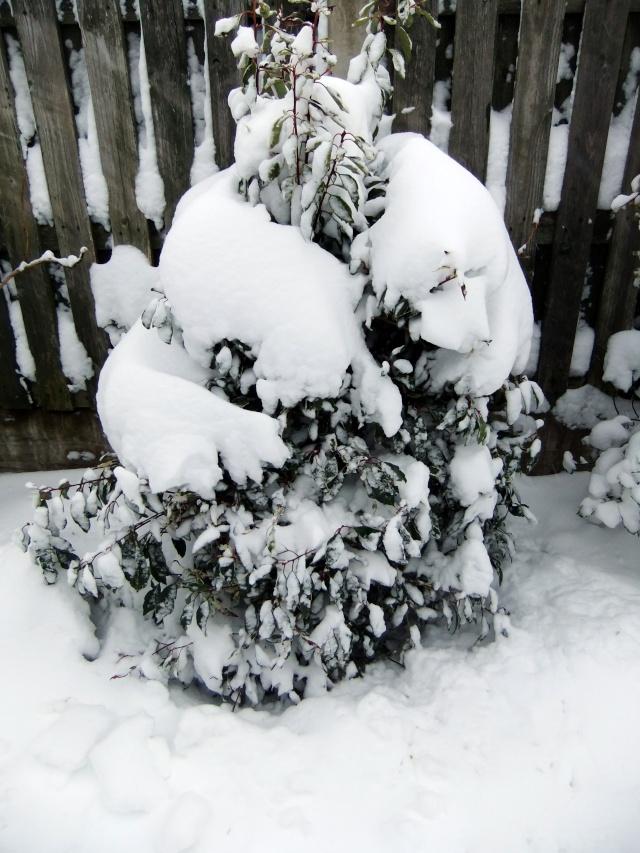 Winter Dscf5511