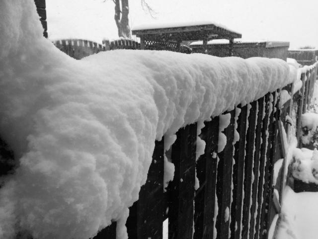 Winter Img_1623