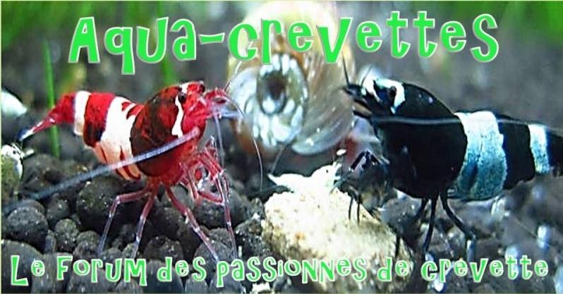 Aqua-Crevettes - Portail Prasen11