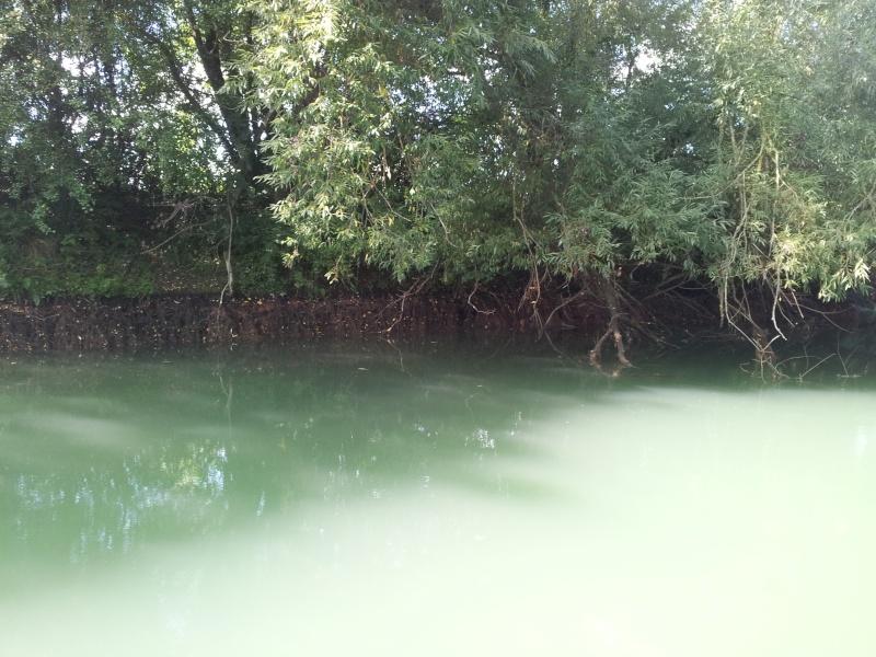 Travaux sur la Meuse... 20130914