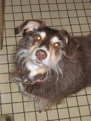Adopter un chien âgé Bobby110