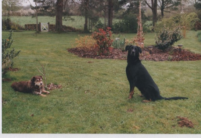 Adopter un chien âgé Photos19