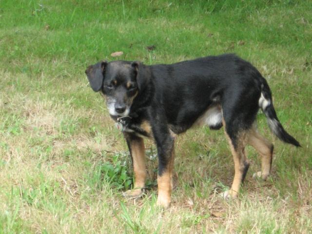 Adopter un chien âgé Popeye11