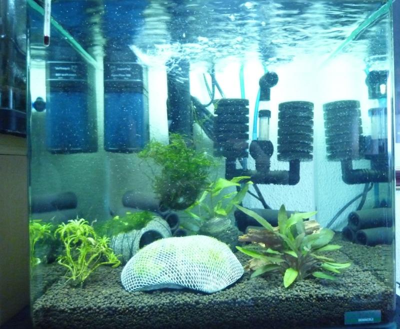 mon nano 30l avec crevettes CRS P1040513