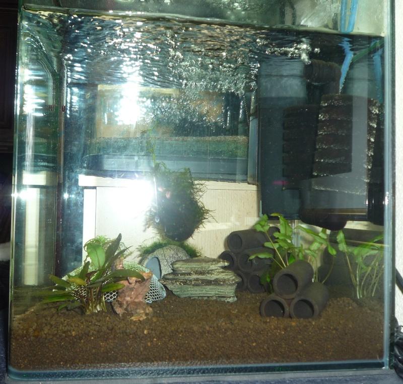 mon nano 30l avec crevettes CRS P1040514