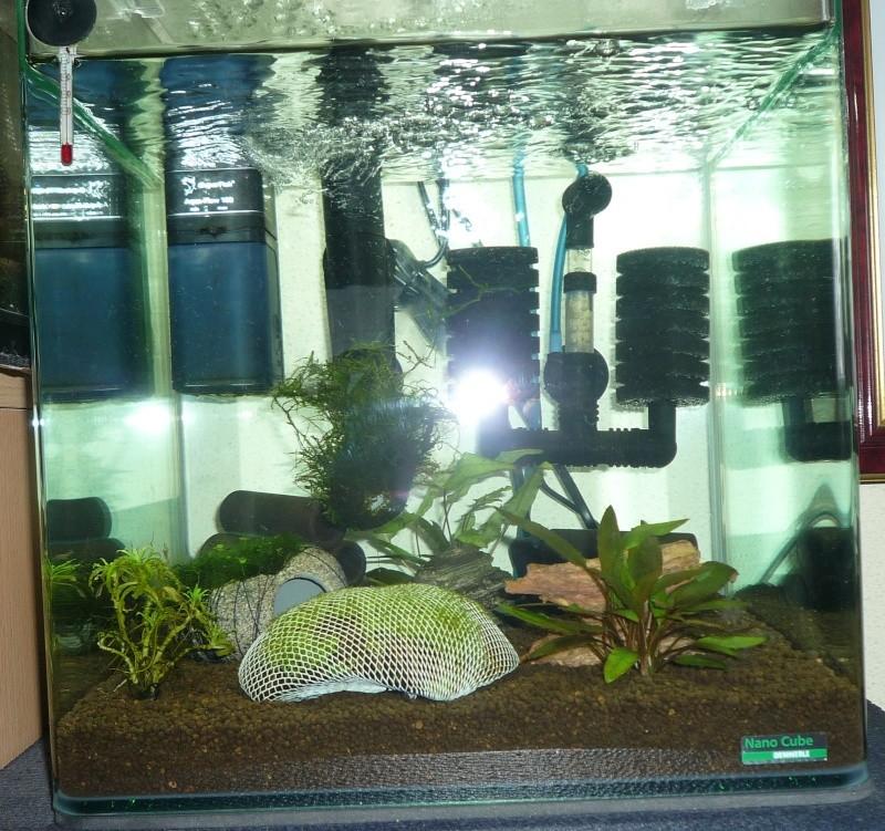 mon nano 30l avec crevettes CRS P1040515