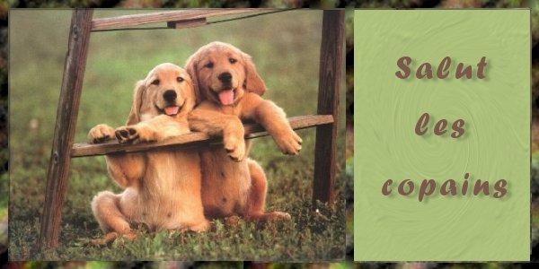 Salut les amis !!!!  - Page 18 Salut510