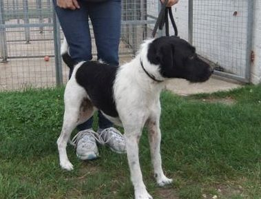 Meet Arthur looking for rescue PTS 23 Sept SAFE Arthur10