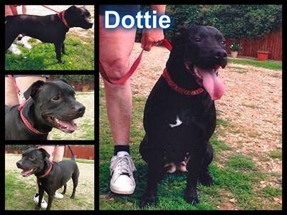 Meet Dottie she needs a rescue before 5th September SAFE Dottie10