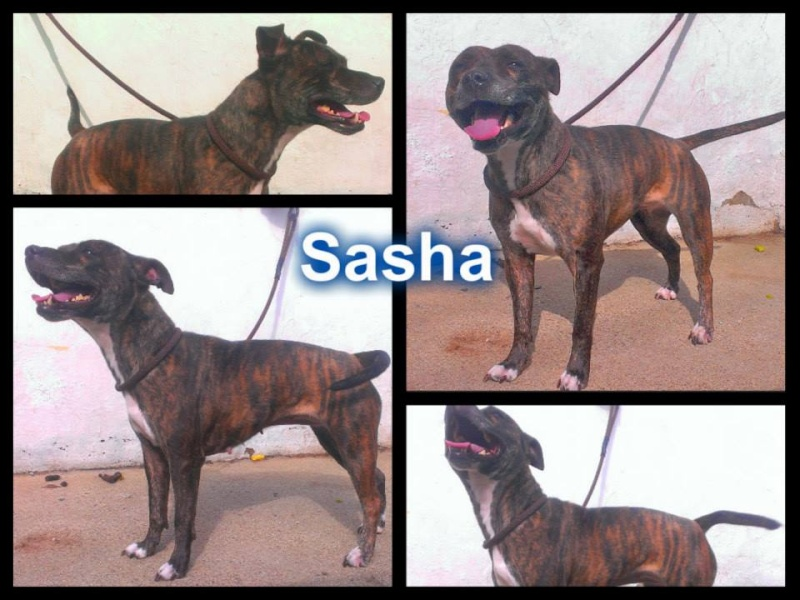 Meet Sasha a lovely girl who is looking for rescue Sasha_10