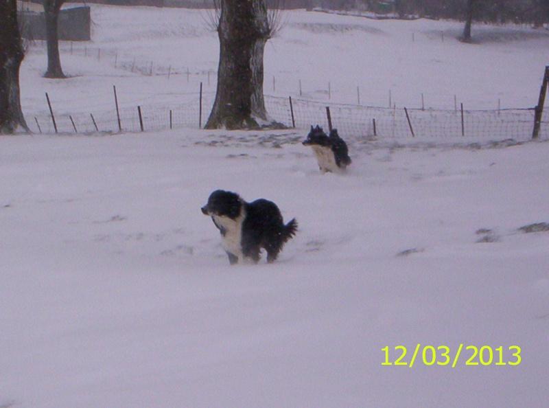 la neige est-elle arrivée chez vous ?  - Page 20 Photo_24