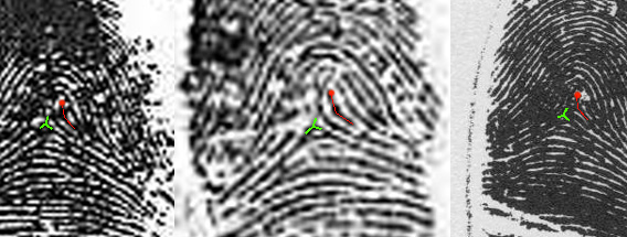 X - WALT DISNEY - One of his fingerprints shows an unusual characteristic! - Page 4 Walt-d10
