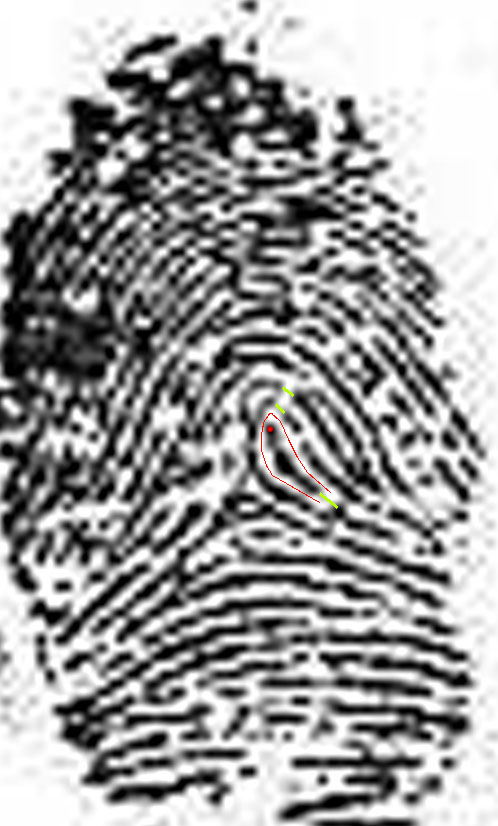 X - WALT DISNEY - One of his fingerprints shows an unusual characteristic! Walt-d11