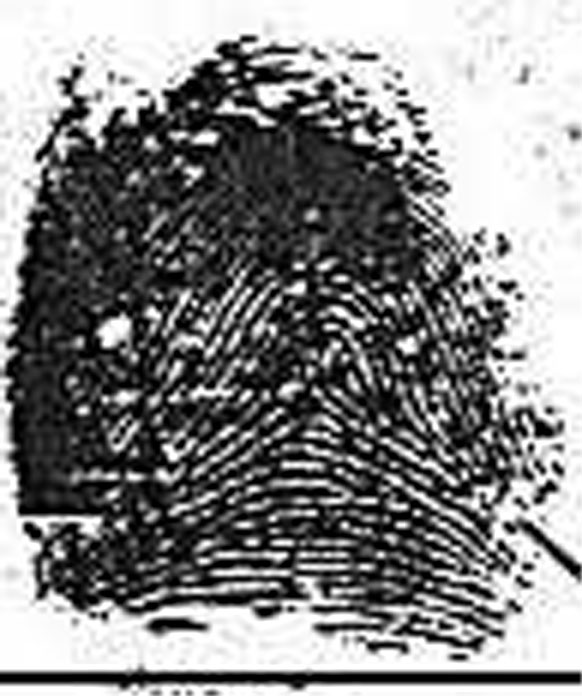 X - WALT DISNEY - One of his fingerprints shows an unusual characteristic! Walt-d14